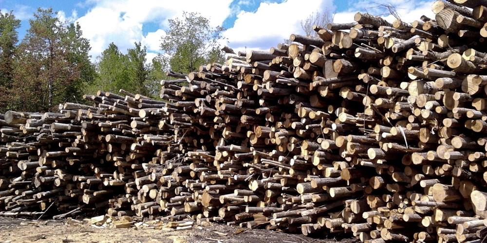 bois de chauffage à vendre - l'environnement du nord