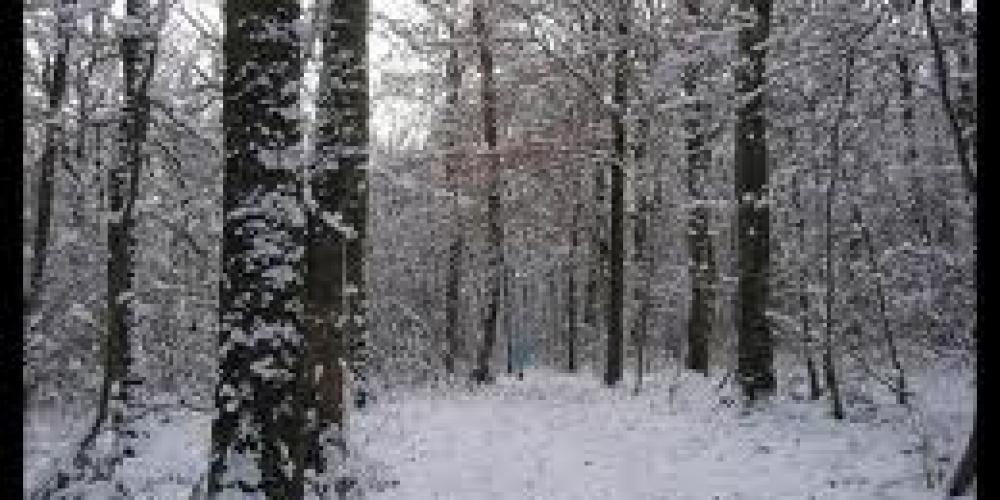Pourquoi couper le bois de chauffage en hiver? Bois de chauffageà vendre L'environnement du  # Quand Couper Le Bois De Chauffage